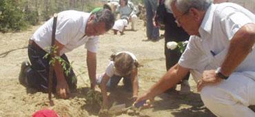 Siembran 95 árboles en Piura